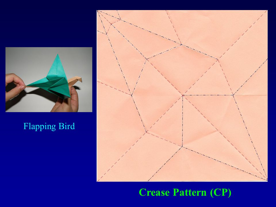 Flapping Bird Crease Pattern (CP)