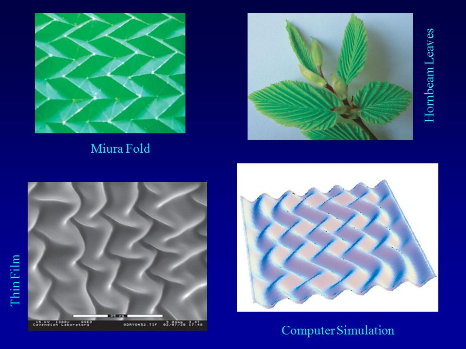 Hornbeam Leaves Miura Fold Thin Film Computer Simulation