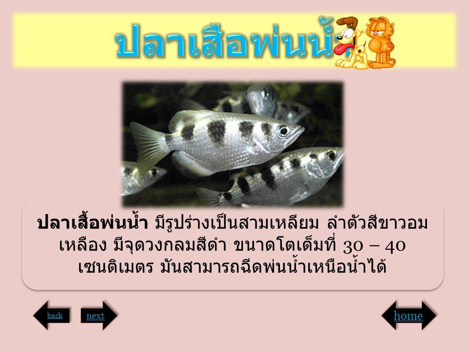 ปลาเสือพ่นน้ำ ปลาเสื้อพ่นน้ำ มีรูปร่างเป็นสามเหลียม ลำตัวสีขาวอมเหลือง มีจุดวงกลมสีดำ ขนาดโตเต็มที่ 30 – 40 เซนติเมตร มันสามารถฉีดพ่นน้ำเหนือน้ำได้