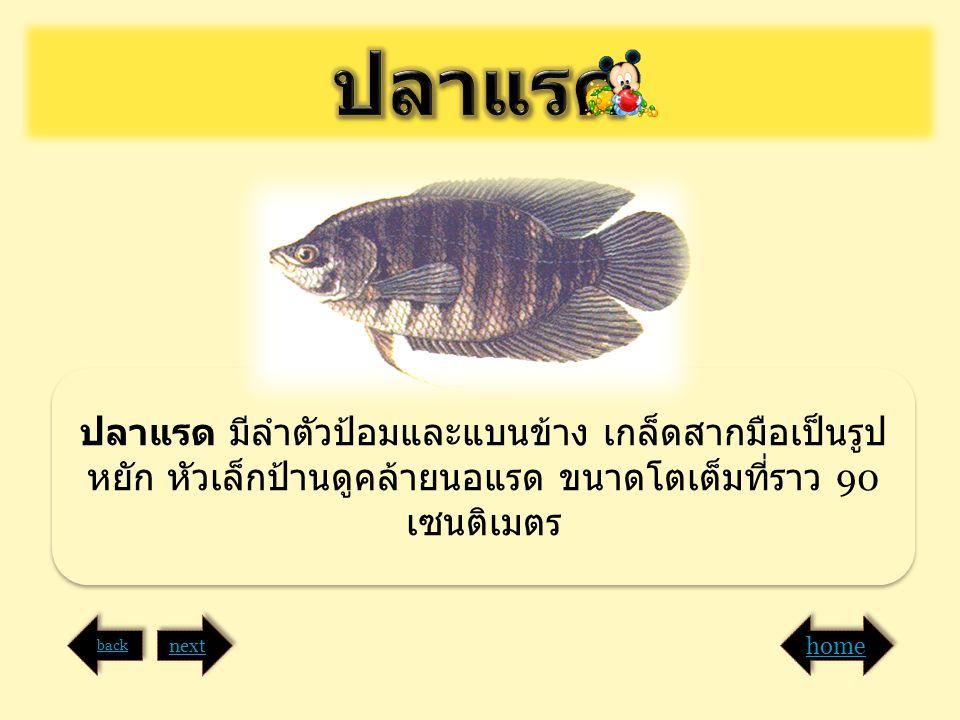 ปลาแรด ปลาแรด มีลำตัวป้อมและแบนข้าง เกล็ดสากมือเป็นรูปหยัก หัวเล็กป้านดูคล้ายนอแรด ขนาดโตเต็มที่ราว 90 เซนติเมตร.