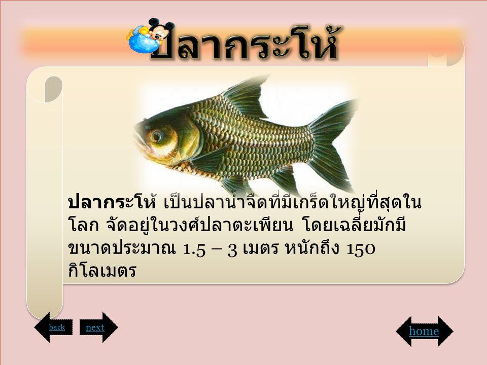 ฤ ปลากระโห้ ปลากระโห้ เป็นปลาน้ำจืดที่มีเกร็ดใหญ่ที่สุดในโลก จัดอยู่ในวงศ์ปลาตะเพียน โดยเฉลี่ยมักมีขนาดประมาณ 1.5 – 3 เมตร หนักถึง 150 กิโลเมตร.