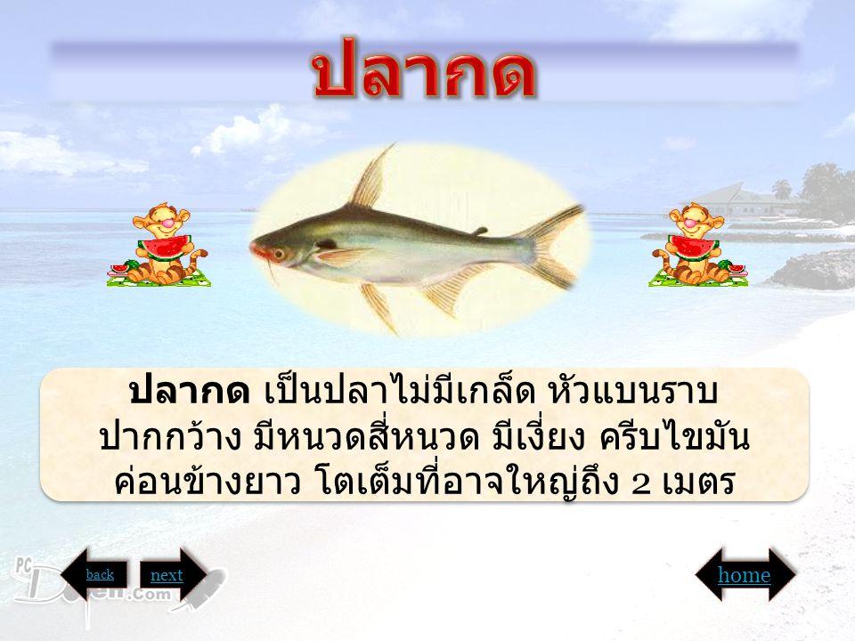 อ ปลากด. ปลากด เป็นปลาไม่มีเกล็ด หัวแบนราบ ปากกว้าง มีหนวดสี่หนวด มีเงี่ยง ครีบไขมันค่อนข้างยาว โตเต็มที่อาจใหญ่ถึง 2 เมตร.