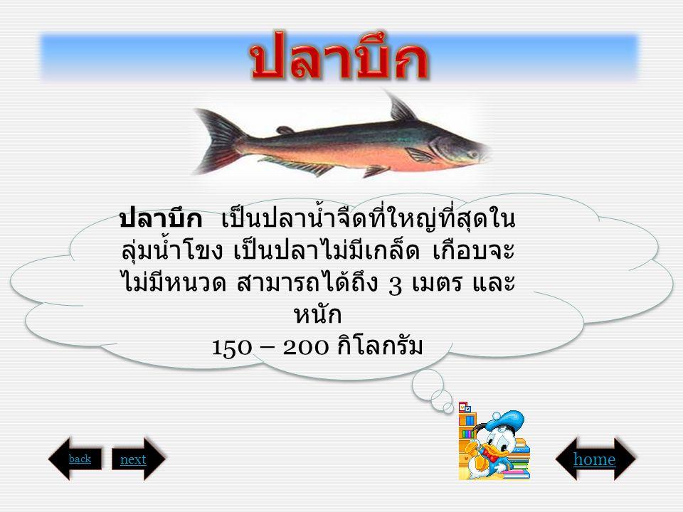 ปลาบึก ปลาบึก เป็นปลาน้ำจืดที่ใหญ่ที่สุดในลุ่มน้ำโขง เป็นปลาไม่มีเกล็ด เกือบจะไม่มีหนวด สามารถได้ถึง 3 เมตร และหนัก.
