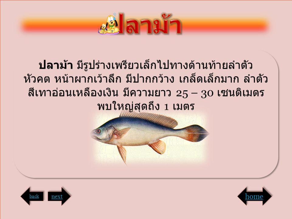 ปลาม้า ปลาม้า มีรูปร่างเพรียวเล็กไปทางด้านท้ายลำตัว หัวคต หน้าผากเว้าลึก มีปากกว้าง เกล็ดเล็กมาก ลำตัวสีเทาอ่อนเหลืองเงิน มีความยาว 25 – 30 เซนติเมตร.