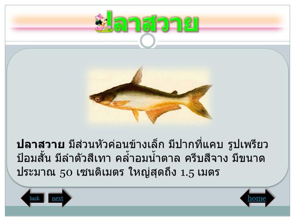 ปลาสวาย ปลาสวาย มีส่วนหัวค่อนข้างเล็ก มีปากที่แคบ รูปเพรียวป้อมสั้น มีลำตัวสีเทา คล้ำอมน้ำตาล ครีบสีจาง มีขนาดประมาณ 50 เซนติเมตร ใหญ่สุดถึง 1.5 เมตร.