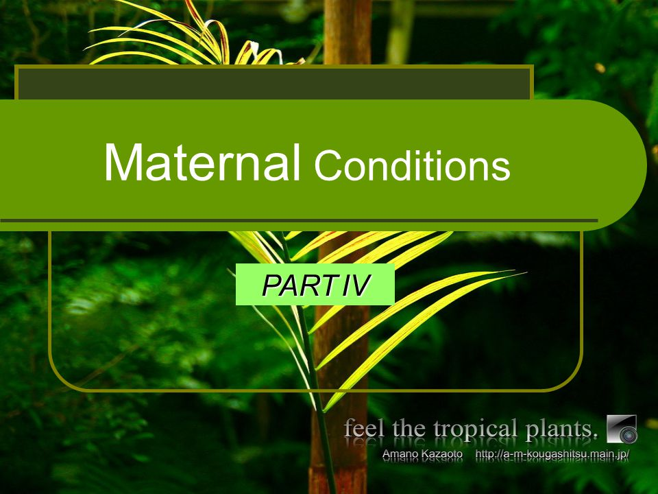 Maternal Conditions PART IV