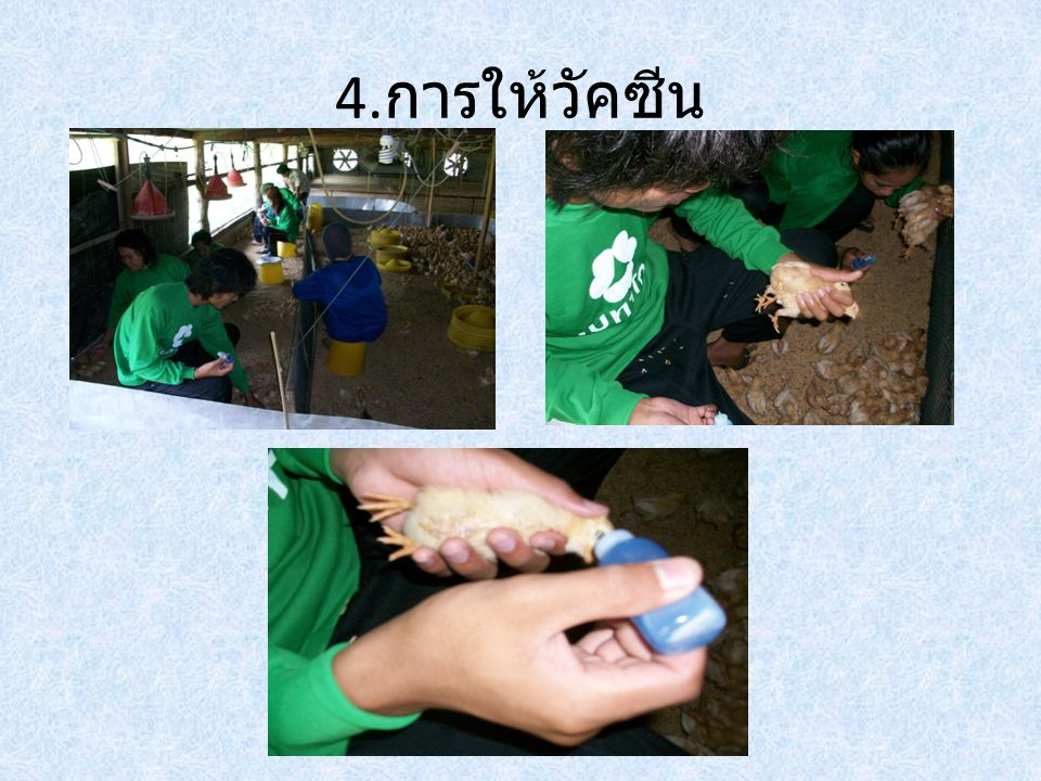 4.การให้วัคซีน