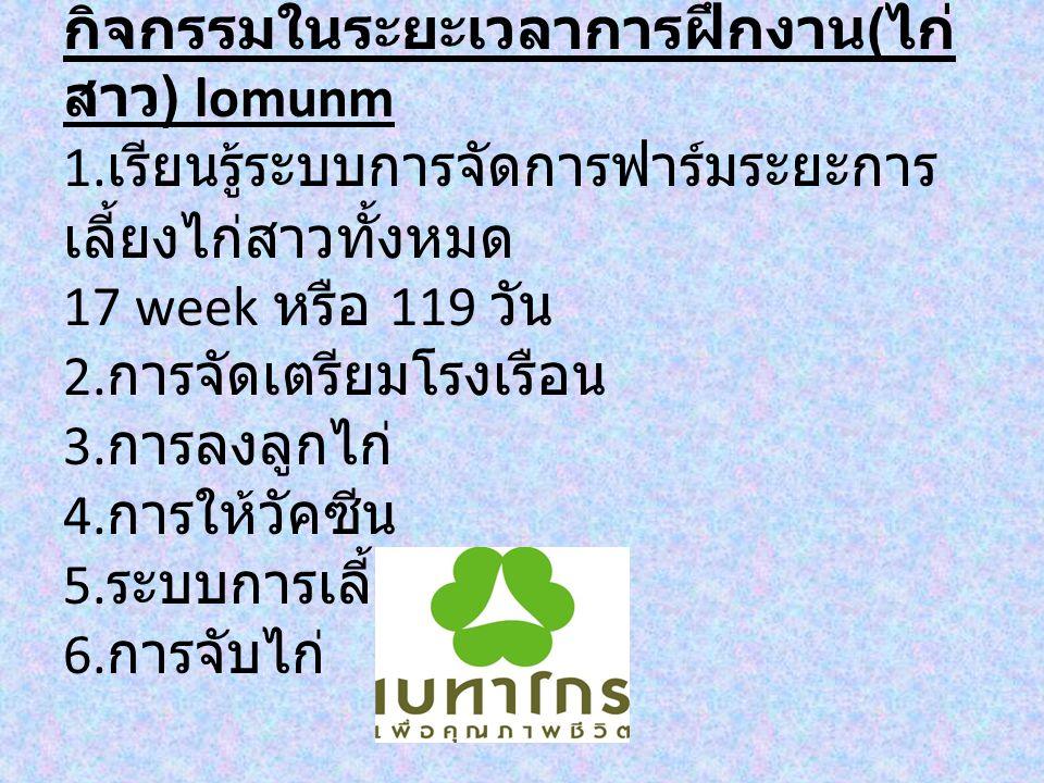 กิจกรรมในระยะเวลาการฝึกงาน(ไก่สาว) lomunm 1