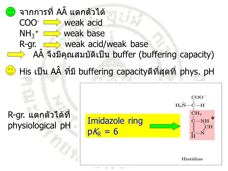 จากการที่ AÂ แตกตัวได้ COO- weak acid NH3+ weak base