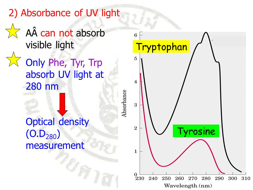 2) Absorbance of UV light