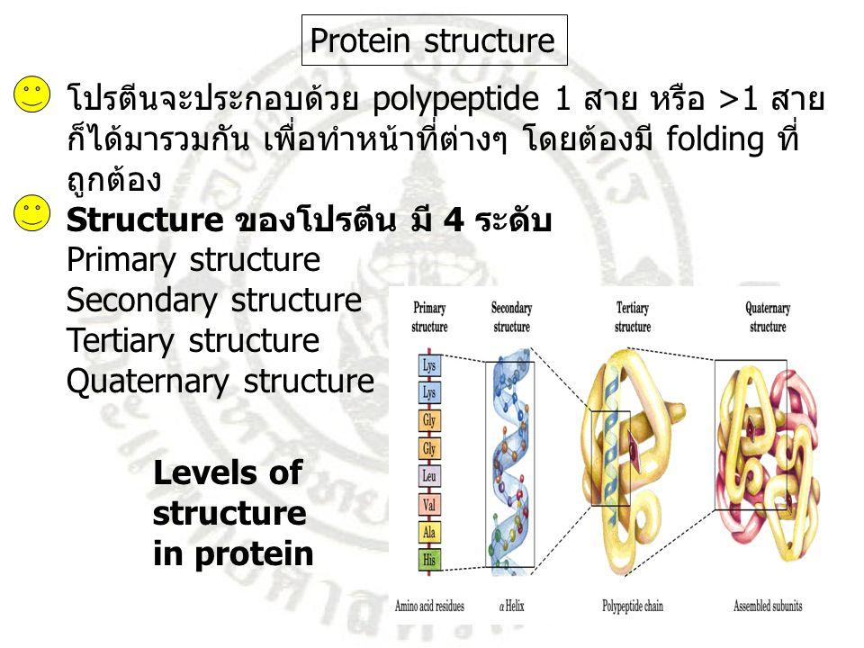 Protein structure โปรตีนจะประกอบด้วย polypeptide 1 สาย หรือ >1 สาย. ก็ได้มารวมกัน เพื่อทำหน้าที่ต่างๆ โดยต้องมี folding ที่