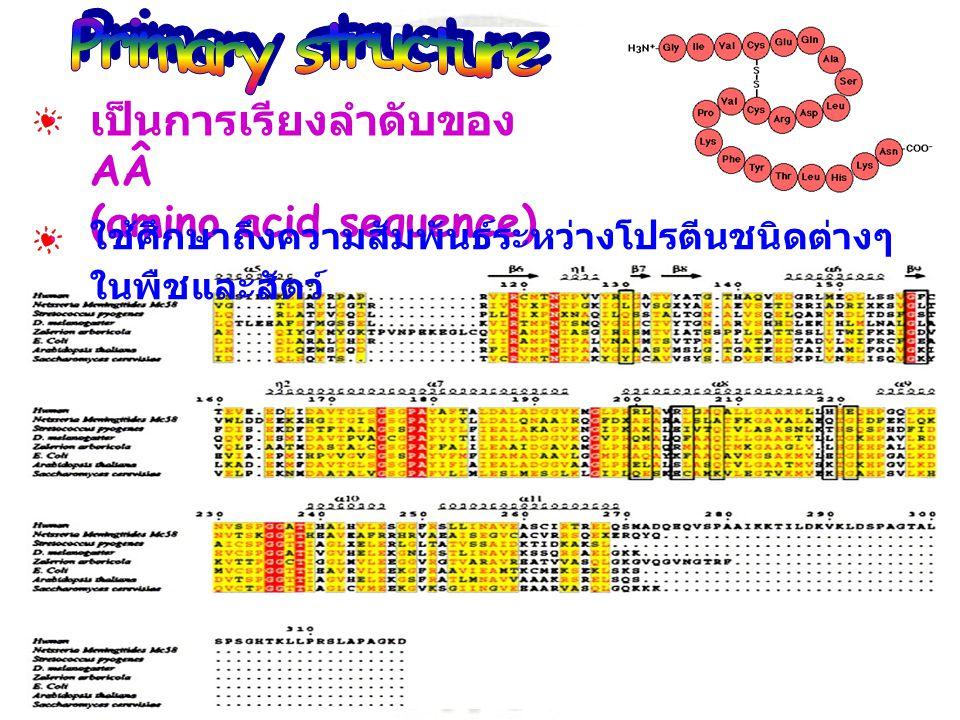 Primary structure เป็นการเรียงลำดับของ AÂ (amino acid sequence)