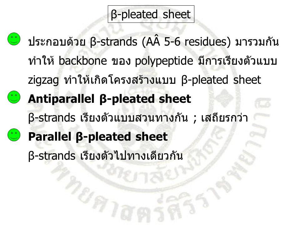 β-pleated sheet ประกอบด้วย β-strands (AÂ 5-6 residues) มารวมกัน. ทำให้ backbone ของ polypeptide มีการเรียงตัวแบบ.