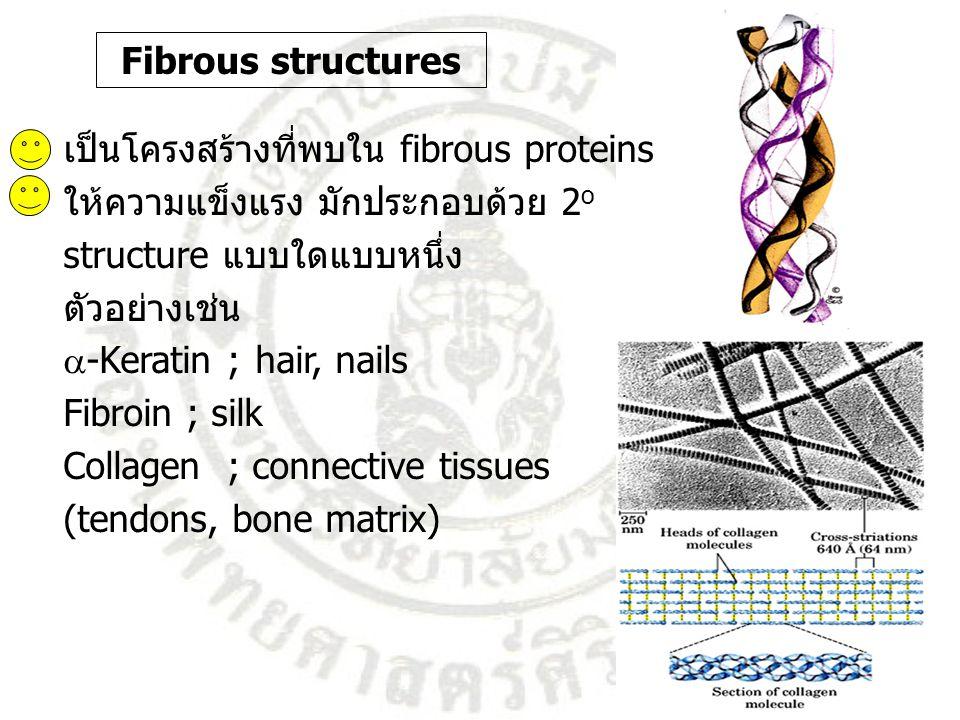 Fibrous structures เป็นโครงสร้างที่พบใน fibrous proteins. ให้ความแข็งแรง มักประกอบด้วย 2o. structure แบบใดแบบหนึ่ง.