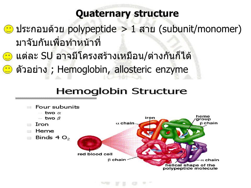 Quaternary structure ประกอบด้วย polypeptide > 1 สาย (subunit/monomer) มาจับกันเพื่อทำหน้าที่ แต่ละ SU อาจมีโครงสร้างเหมือน/ต่างกันก็ได้