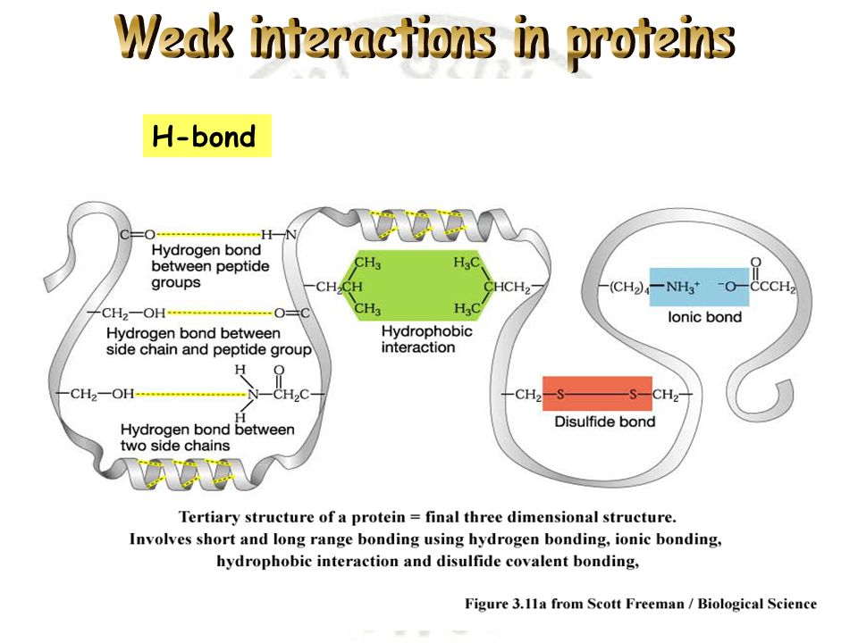 Weak interactions in proteins