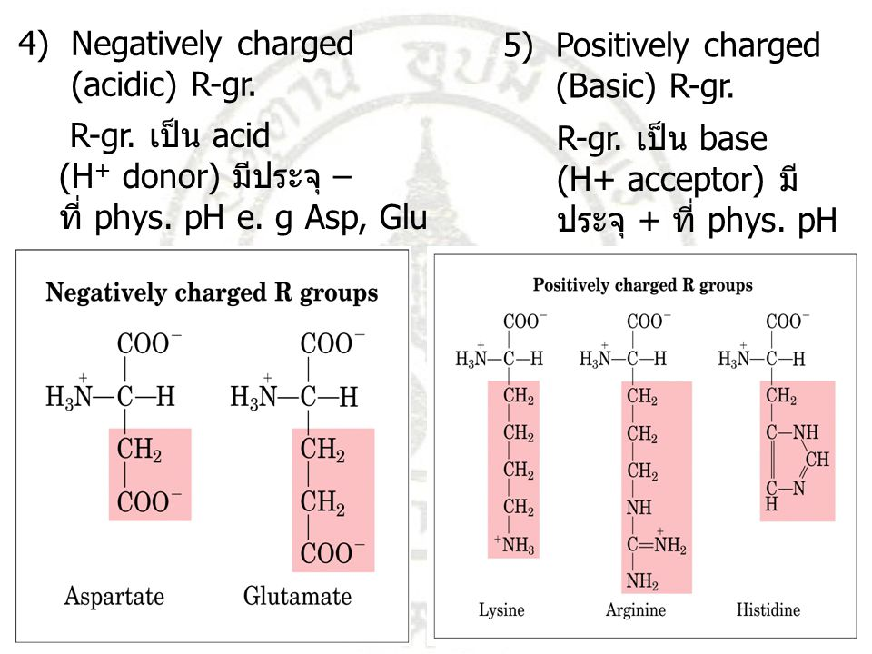 4) Negatively charged (acidic) R-gr. 5) Positively charged. (Basic) R-gr. R-gr. เป็น acid. (H+ donor) มีประจุ –