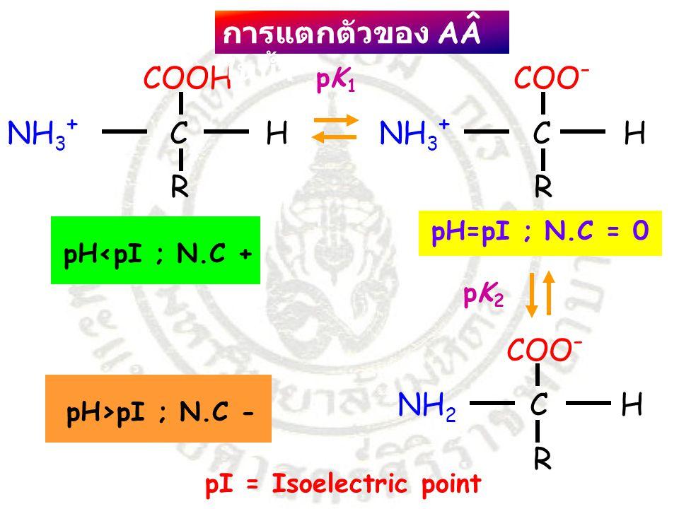 COOH COO- การแตกตัวของ AÂ ในน้ำ NH3+ C H NH3+ C H R R COO- NH2 C H R