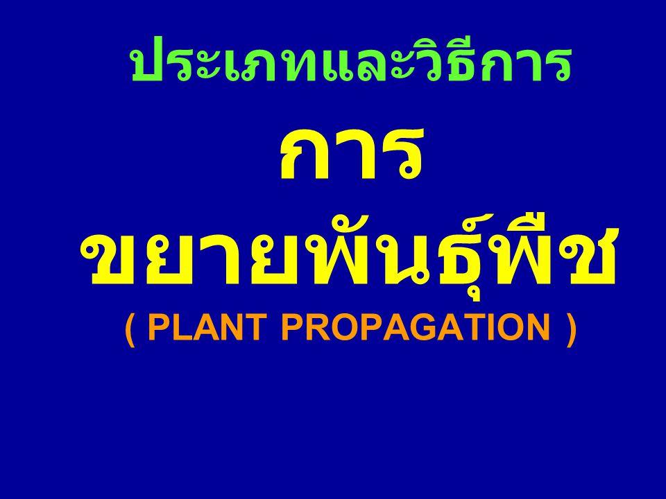 ประเภทและวิธีการ การขยายพันธุ์พืช ( PLANT PROPAGATION )