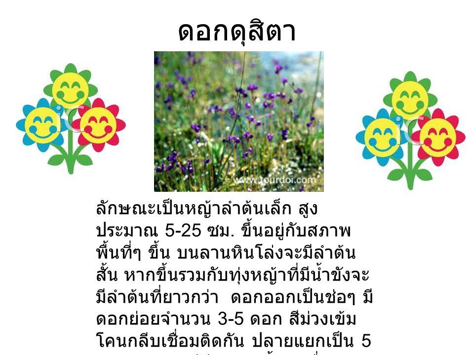 ดอกดุสิตา