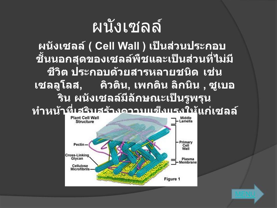 ผนังเซลล์