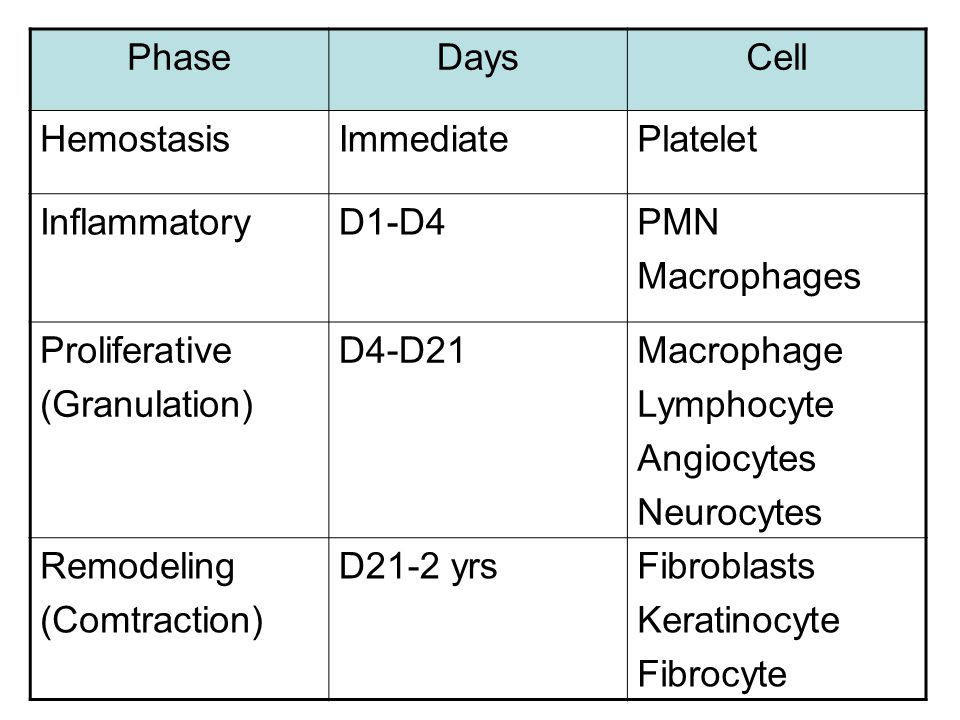Phase Days. Cell. Hemostasis. Immediate. Platelet. Inflammatory. D1-D4. PMN. Macrophages. Proliferative.