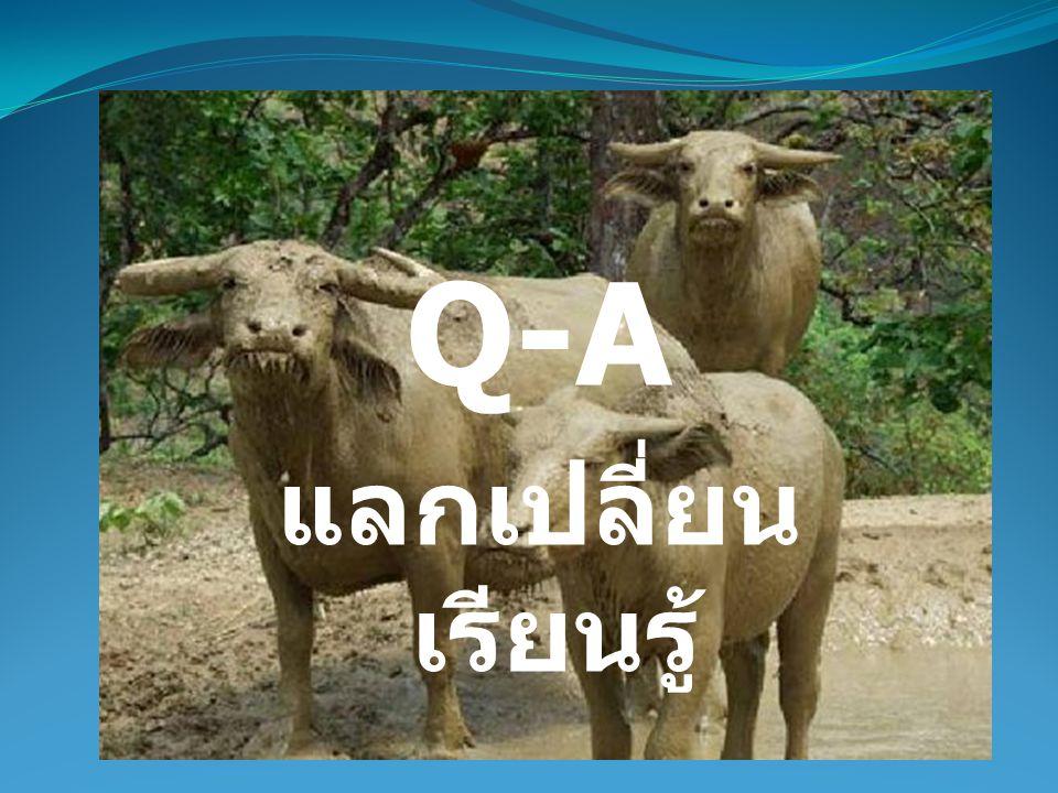 Q-A แลกเปลี่ยนเรียนรู้