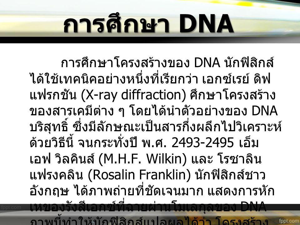 การศึกษา DNA