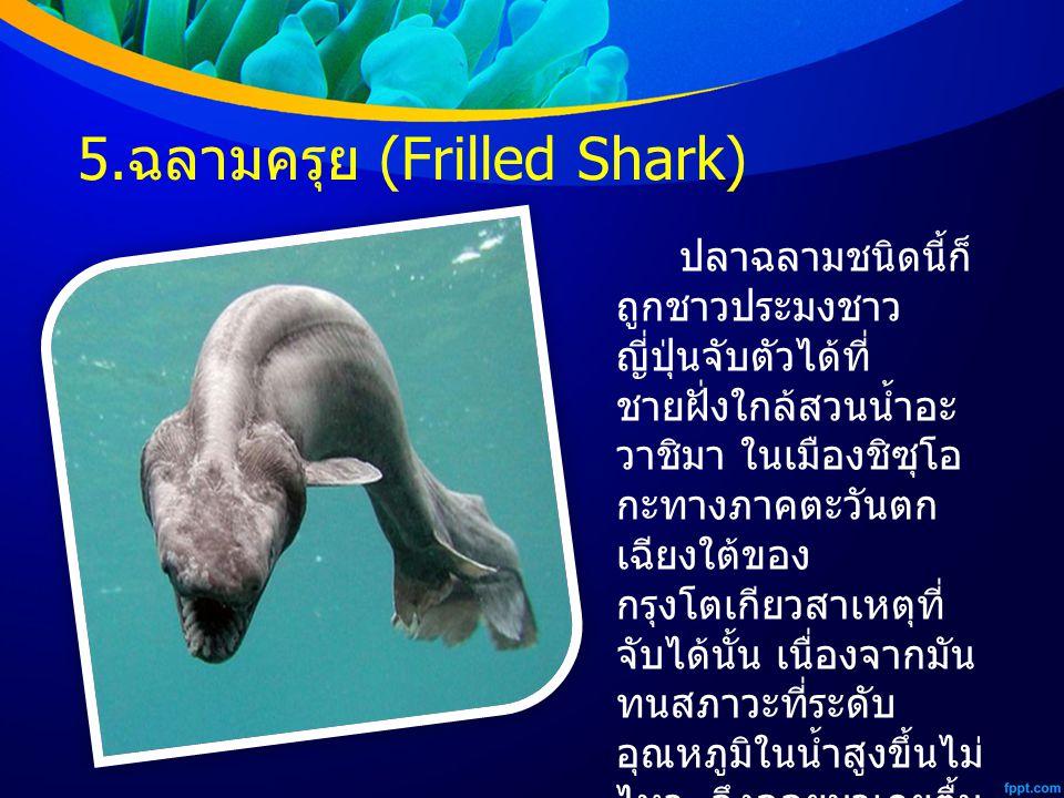 5.ฉลามครุย (Frilled Shark)