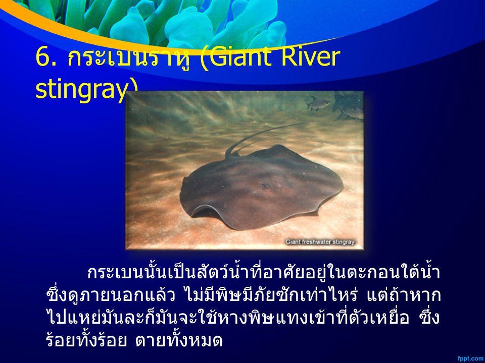 6. กระเบนราหู (Giant River stingray)