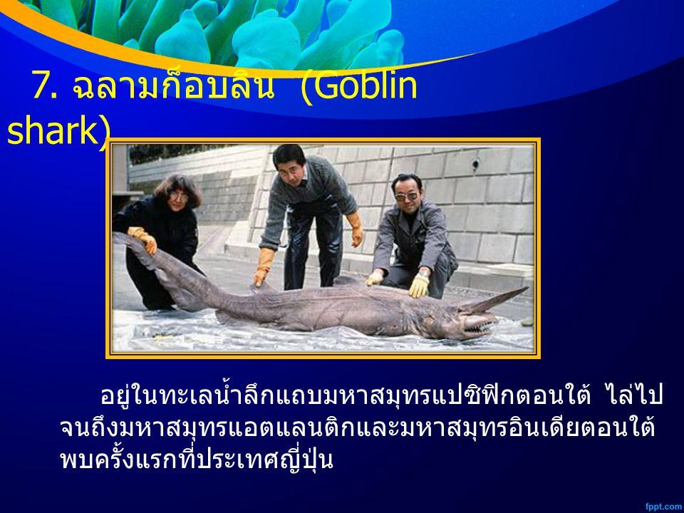7. ฉลามก็อบลิน (Goblin shark)