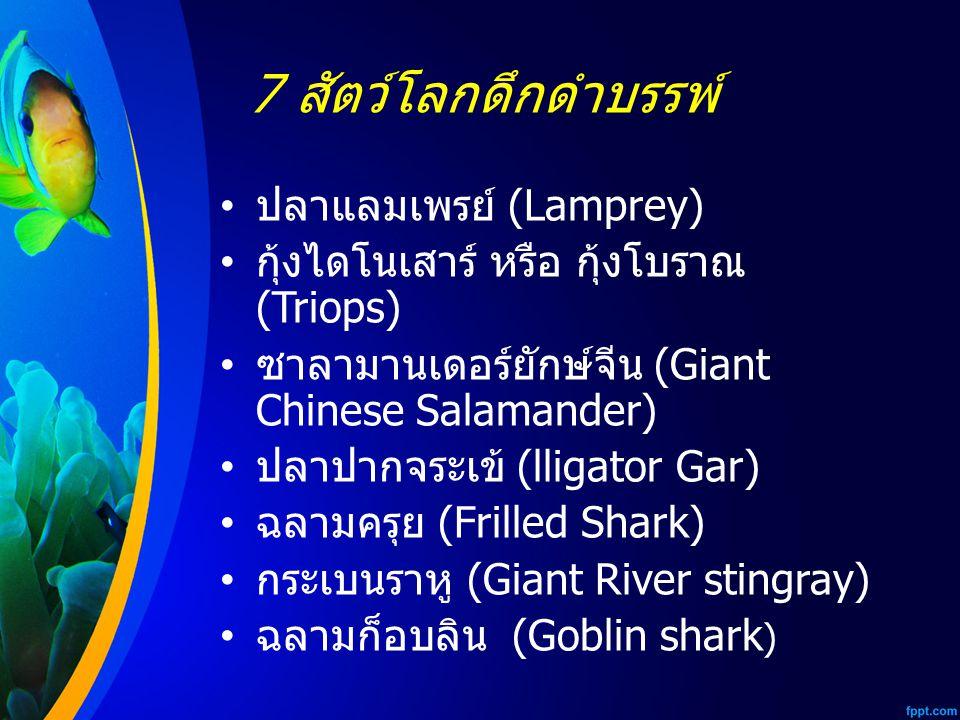 7 สัตว์โลกดึกดำบรรพ์ ปลาแลมเพรย์ (Lamprey)