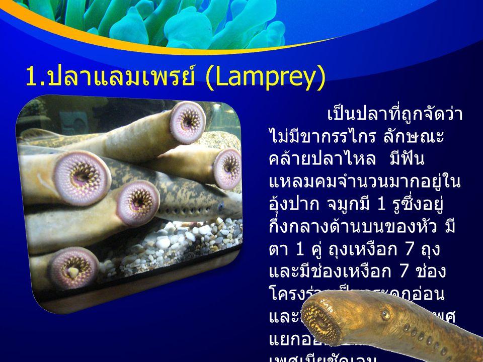 1.ปลาแลมเพรย์ (Lamprey)