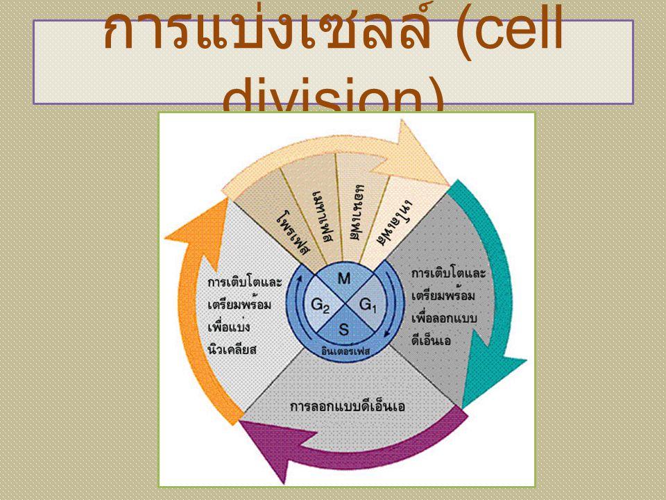 การแบ่งเซลล์ (cell division)