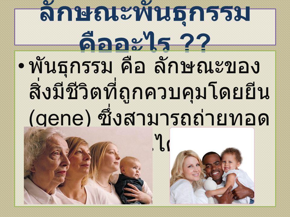 ลักษณะพันธุกรรม คืออะไร