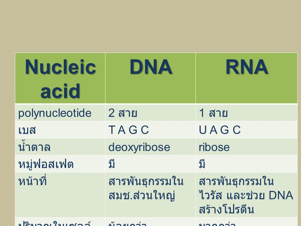 Nucleic acid DNA RNA polynucleotide 2 สาย 1 สาย เบส T A G C U A G C