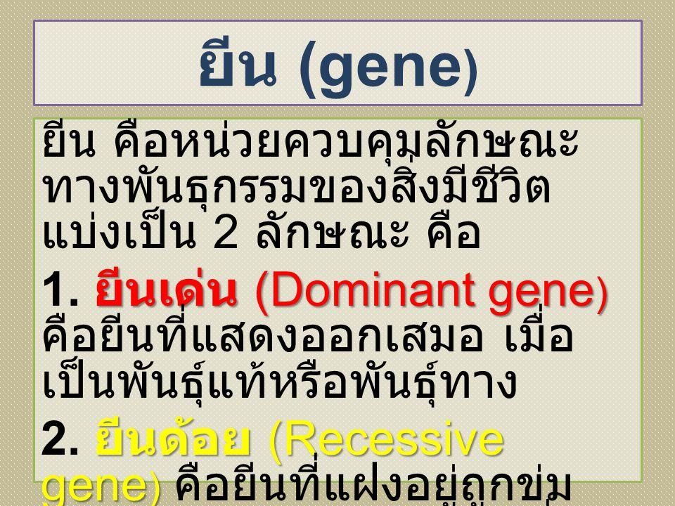 ยีน (gene)