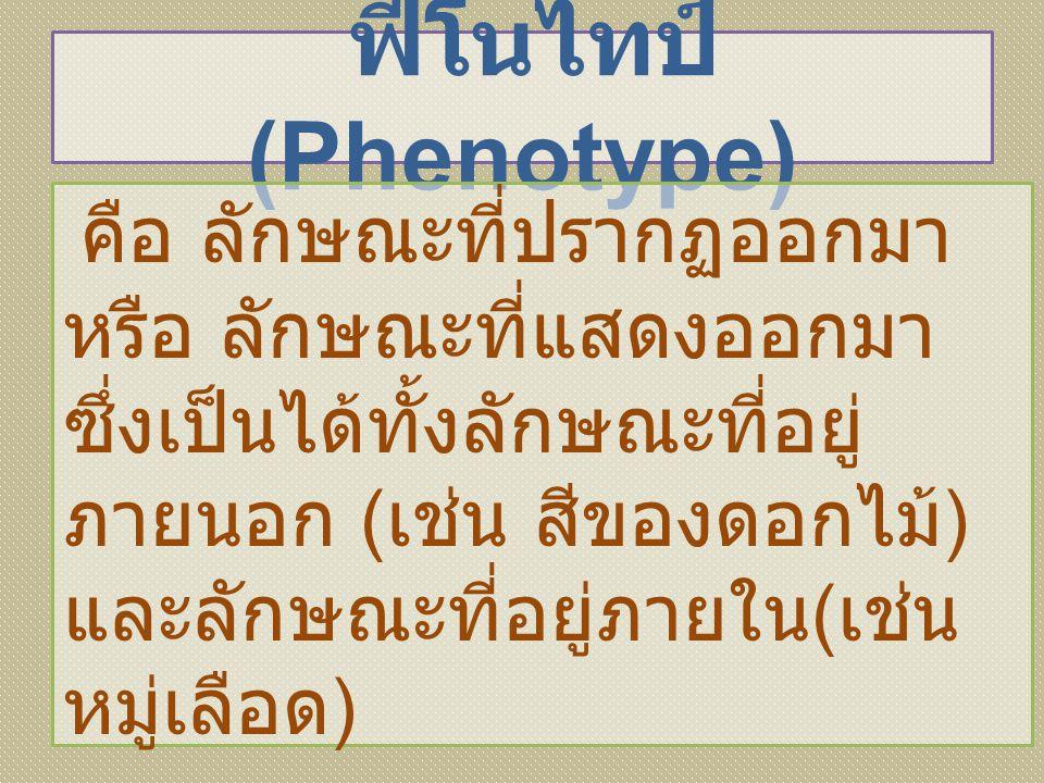 ฟีโนไทป์ (Phenotype)