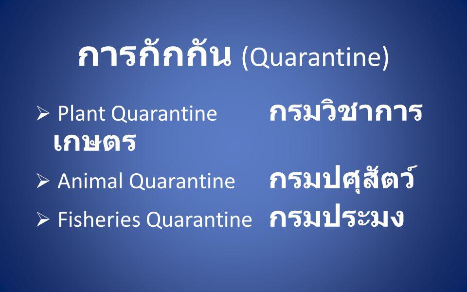 การกักกัน (Quarantine)