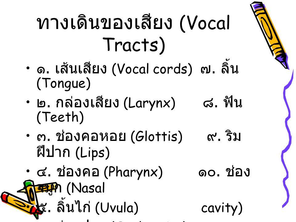 ทางเดินของเสียง (Vocal Tracts)