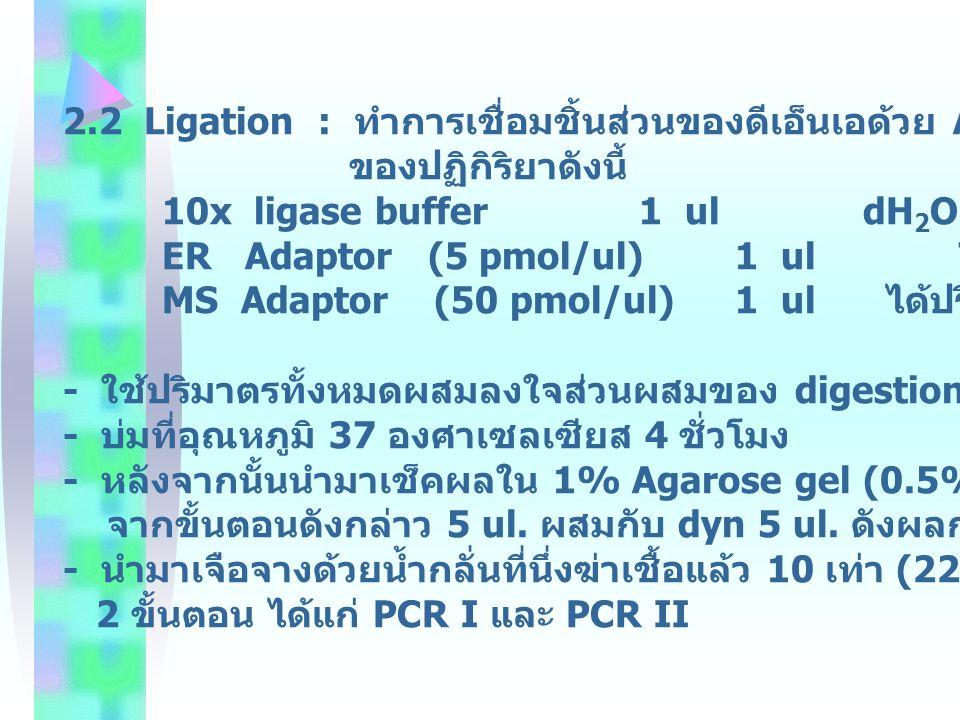 2.2 Ligation : ทำการเชื่อมชิ้นส่วนของดีเอ็นเอด้วย Adaptor ด้วยส่วนประกอบ
