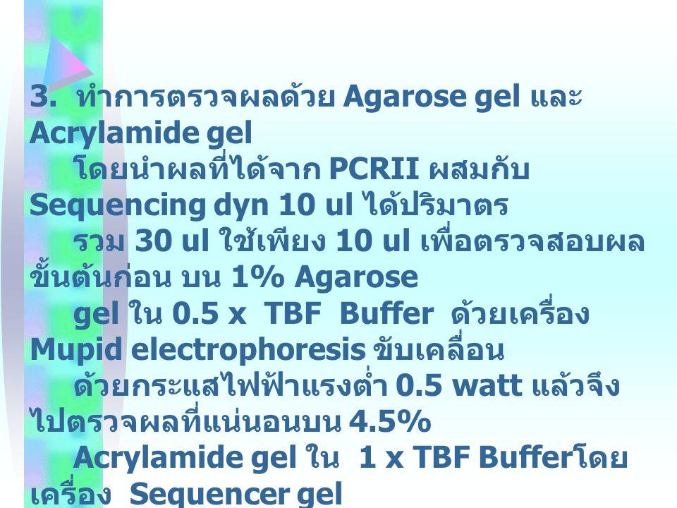 3. ทำการตรวจผลด้วย Agarose gel และ Acrylamide gel