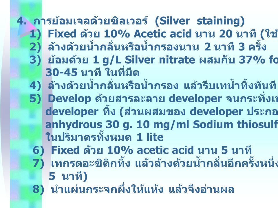 4. การย้อมเจลด้วยซิลเวอร์ (Silver staining)