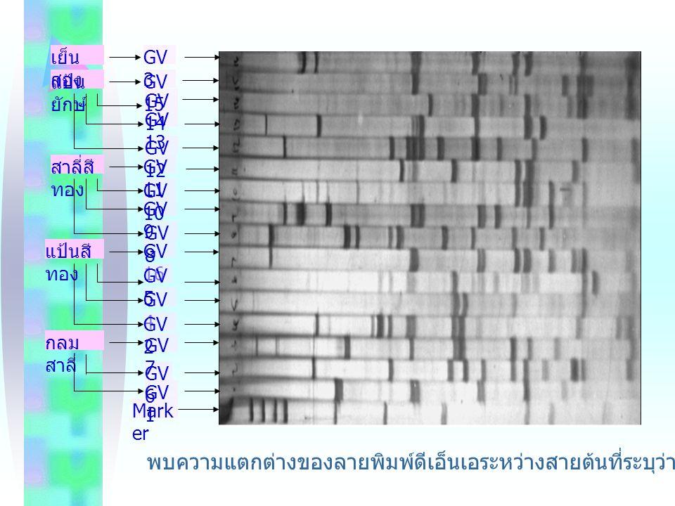 เย็นสอง Marker. GV1. GV6. GV7. GV4. GV2. GV16. GV8. GV9. GV10. GV11. GV12. GV13. GV14.
