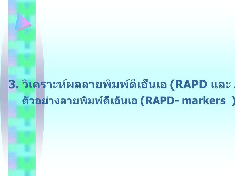 3. วิเคราะห์ผลลายพิมพ์ดีเอ็นเอ (RAPD และ AFLP- markers) ของฝรั่ง