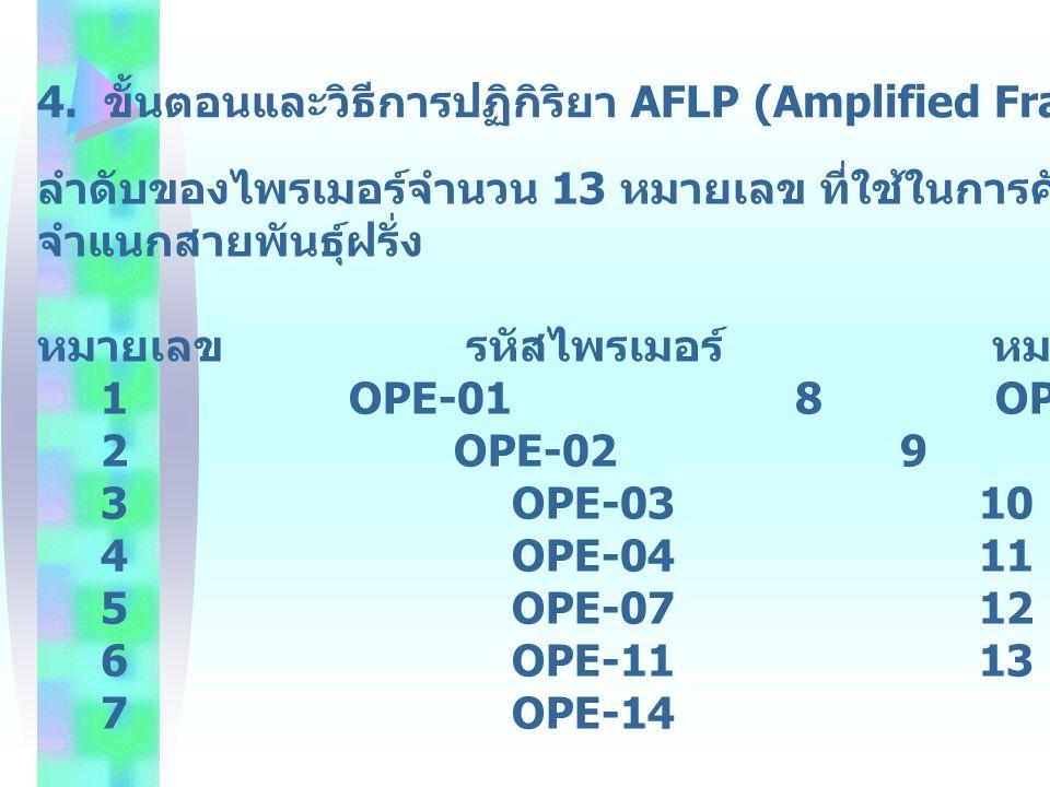 4. ขั้นตอนและวิธีการปฏิกิริยา AFLP (Amplified Fragment Length Polymprphism)
