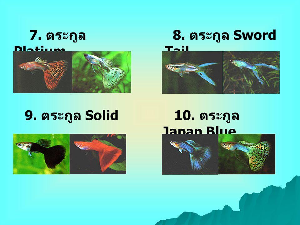 7. ตระกูล Platium 8. ตระกูล Sword Tail 9. ตระกูล Solid 10. ตระกูล Japan Blue