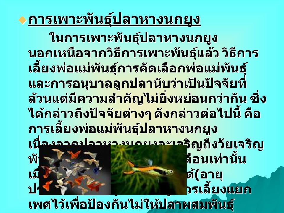 การเพาะพันธุ์ปลาหางนกยูง