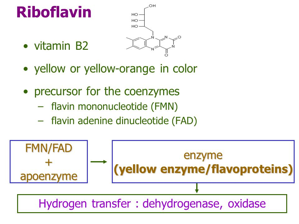 (yellow enzyme/flavoproteins)