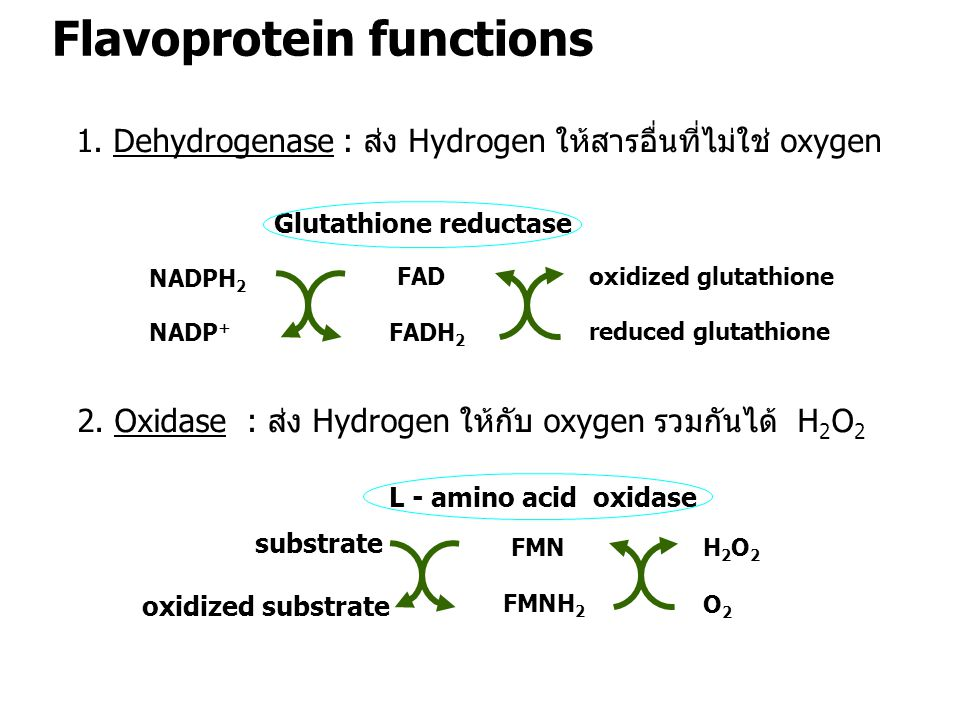 Glutathione reductase